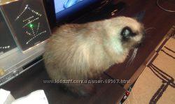 Груминг кошек с выездом мастера на дом