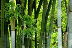 Уходовая пудра с Бамбука - Bamboo Silk Powder и Rice Silk Powder