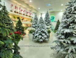 Шикарные  елки и сосны от производителей Смерека и Квазар