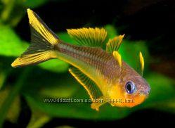 Широкий ассортимент аквариумной рыбы