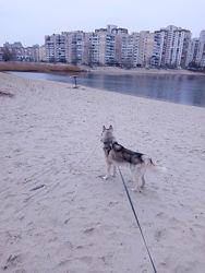 Выгул и передержка собак. Киев, Позняки
