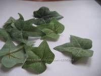листья плюща,12грн.